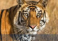Tiger Safaris in Indien Fotoreisen