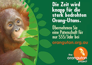 Save Orang Utans with AOP Australian Orangutan Project