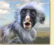Safari Reisen Tansania