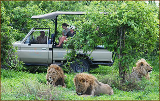 Safari Tour in Linyanti