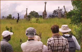 guided walking safari in Linyanti