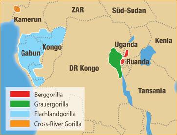 Wo Leben Gorillas