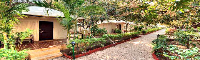 Luxus Camp in Gir