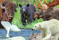 Reise zu den Big Five in Kanada